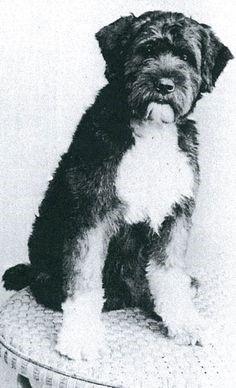 Short-Haired-Dog