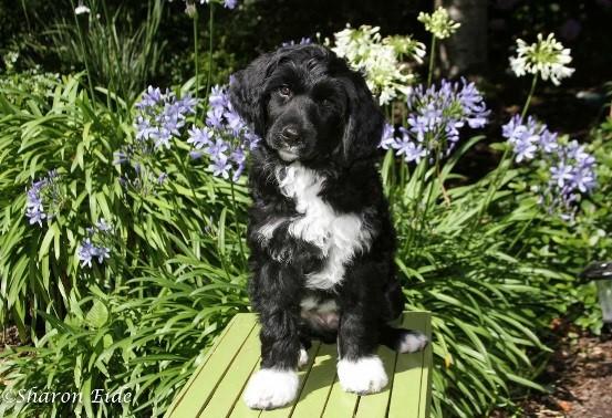 Augie-2-months